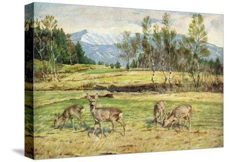 Künstler Heinrich Schütz, Frühlingsabend Im Vorgebirgsmoos, Rehe--Stretched Canvas Print