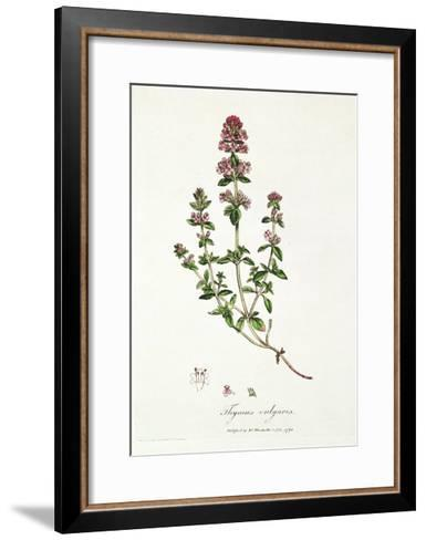 Thyme: Thymus Vulgarus, Published by Dr. Woodville, 1791--Framed Art Print