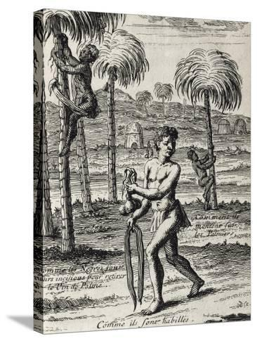 Harvesting La Palma Wine and Native Customs, Senegal from Lemaire's Travel, 1682--Stretched Canvas Print