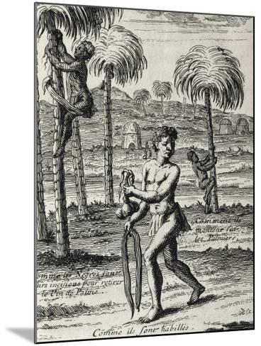 Harvesting La Palma Wine and Native Customs, Senegal from Lemaire's Travel, 1682--Mounted Giclee Print