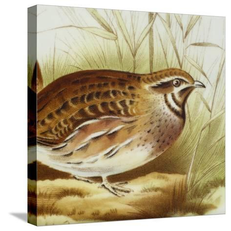 Plate Decorated with Quail, Ceramic--Stretched Canvas Print