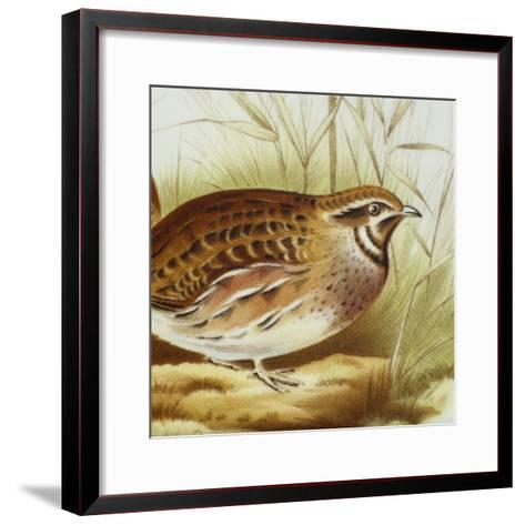 Plate Decorated with Quail, Ceramic--Framed Art Print