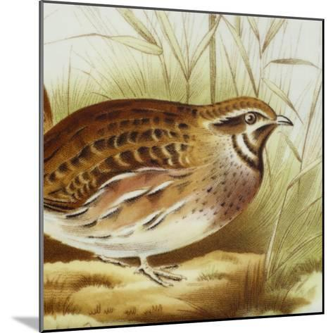 Plate Decorated with Quail, Ceramic--Mounted Giclee Print