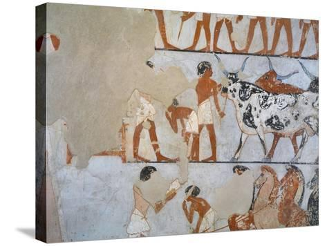 Egypt, Thebes, Luxor, Tomb of Army General Tjenuny, Mural Paintings Showing Cows and Horses--Stretched Canvas Print