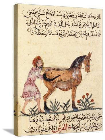 Veterinary Surgeon Helping a Horse to Foal, Miniature, Islamic Art, 13th Century--Stretched Canvas Print