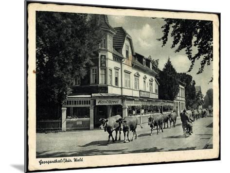 Georgenthal Thüringer Wald, Kühe Auf Der Straße, Konditorei--Mounted Giclee Print