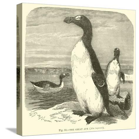 The Great Auk, Alca Impennis--Stretched Canvas Print