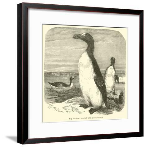 The Great Auk, Alca Impennis--Framed Art Print