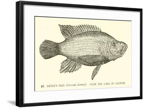 St Peter's Fish--Framed Art Print