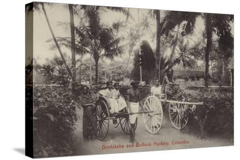 Ginricksha and Bullock Hackery in Colombo--Stretched Canvas Print