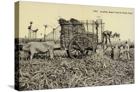 Loading Sugar Cane in Field, Cuba--Stretched Canvas Print