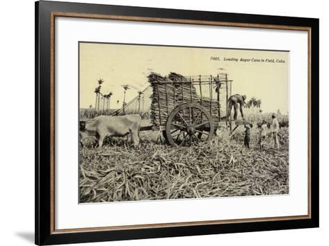Loading Sugar Cane in Field, Cuba--Framed Art Print