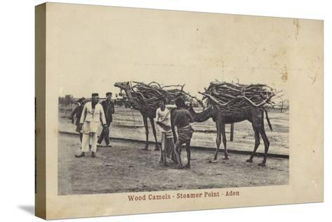 Camels Carrying Wood, Steamer Point, Aden--Stretched Canvas Print