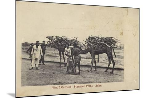 Camels Carrying Wood, Steamer Point, Aden--Mounted Photographic Print