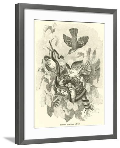 Serpent Attacking a Nest--Framed Art Print
