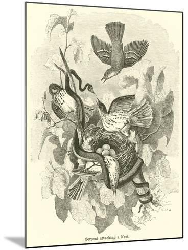 Serpent Attacking a Nest--Mounted Giclee Print