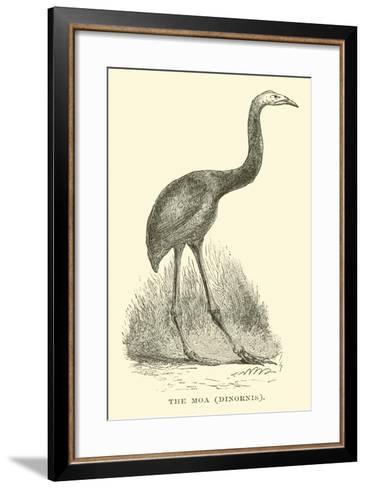 The Moa, Dinornis--Framed Art Print