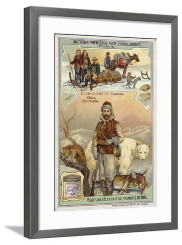 Fur: Canadian Lynx; Bear and Opossum--Framed Art Print