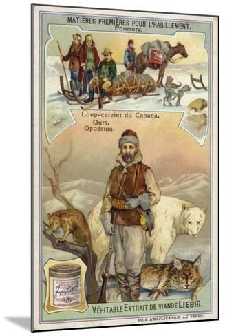 Fur: Canadian Lynx; Bear and Opossum--Mounted Giclee Print