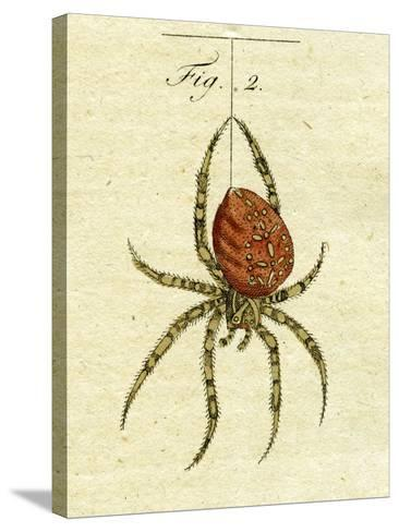 Illustration of a Spider, 1790-Jacob Xavier Schmuzer-Stretched Canvas Print