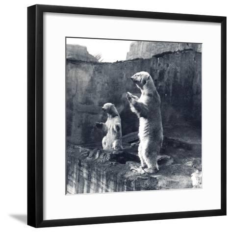 Two Polar Bears Standing Up-Frederick William Bond-Framed Art Print