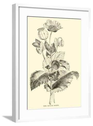 The Opium Poppy--Framed Art Print