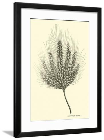 Egyptian Corn--Framed Art Print