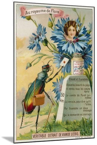 Cornflower and Beetle--Mounted Giclee Print
