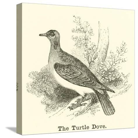 The Turtle Dove--Stretched Canvas Print