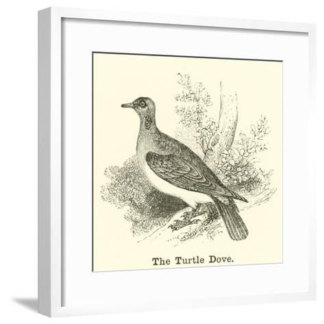 The Turtle Dove--Framed Art Print