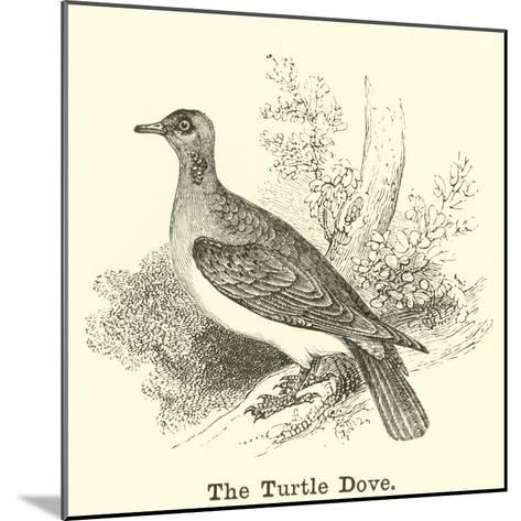 The Turtle Dove--Mounted Giclee Print