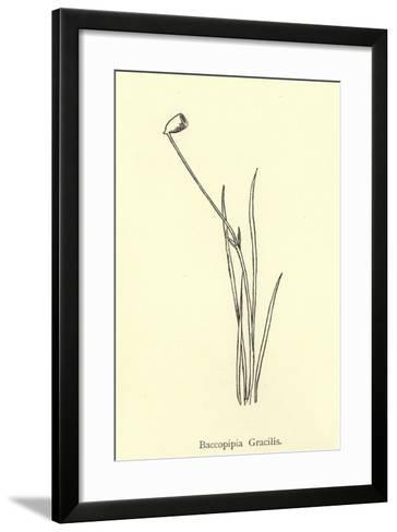 Baccopipia Gracilis-Edward Lear-Framed Art Print
