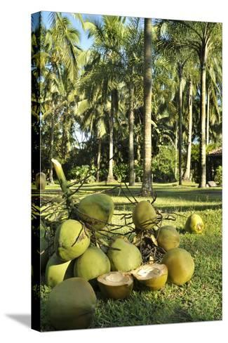 Coconuts--Stretched Canvas Print