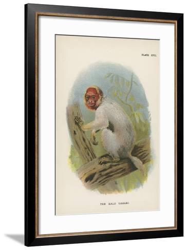 The Bald Uakari--Framed Art Print