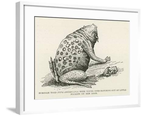 Surinam Toad--Framed Art Print