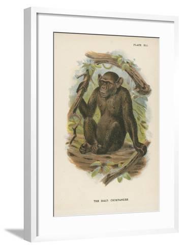 The Blad Chimpanzee--Framed Art Print