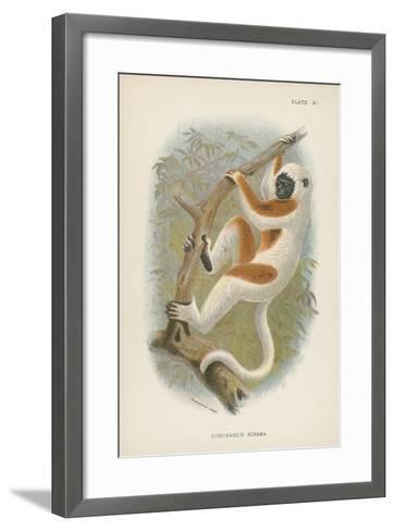 Coquerel's Sifaka--Framed Art Print