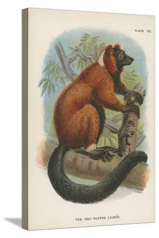 The Red-Ruffed Lemur--Stretched Canvas Print