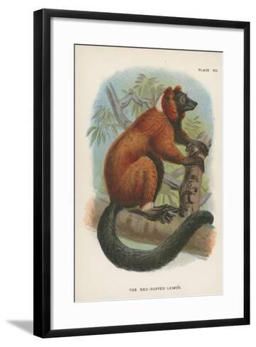 The Red-Ruffed Lemur--Framed Art Print