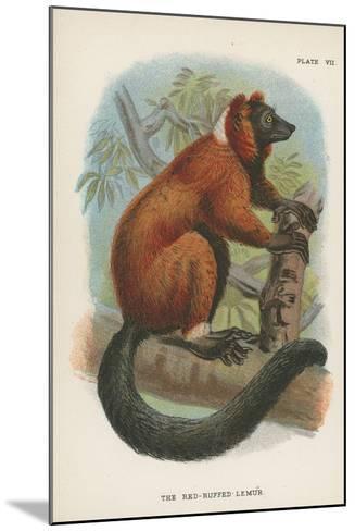 The Red-Ruffed Lemur--Mounted Giclee Print