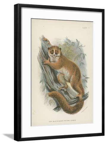 The Black-Eared Mouse-Lemur--Framed Art Print