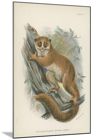 The Black-Eared Mouse-Lemur--Mounted Giclee Print