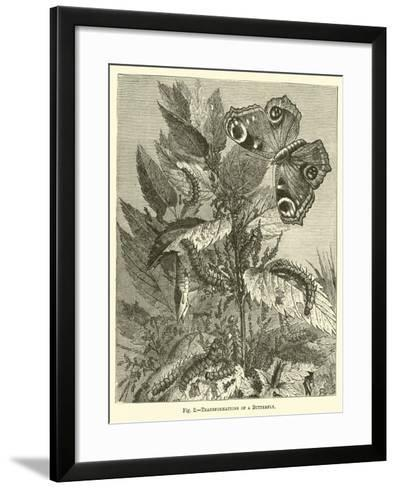 Transformations of a Butterfly--Framed Art Print