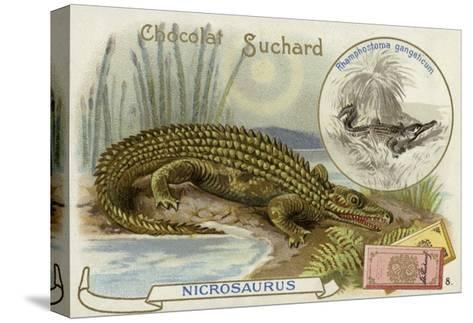 Nicrosaurus and Crocodile--Stretched Canvas Print