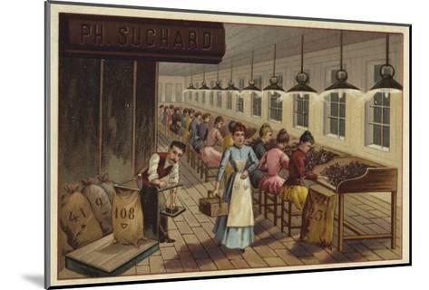 Cocoa Processing Plant--Mounted Giclee Print