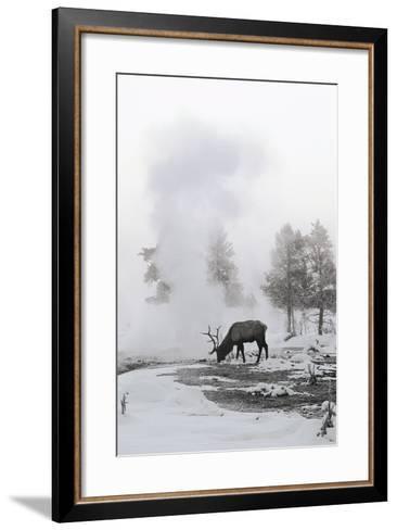 Reindeer Looking for Grass under the Snow--Framed Art Print