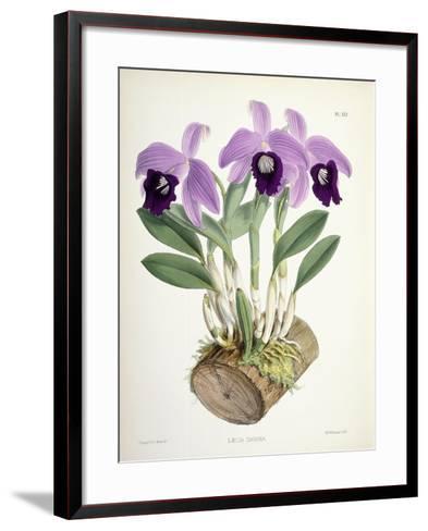Laelia Dayana, C.1882-1897-Walter Hood Fitch-Framed Art Print