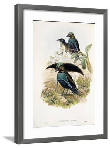 Superb Bird of Paradise--Framed Art Print