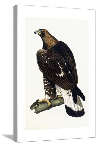 A Young Golden Eagle, 1841-Prideaux John Selby-Stretched Canvas Print