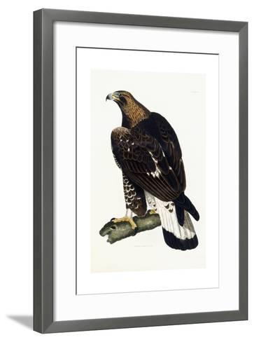 A Young Golden Eagle, 1841-Prideaux John Selby-Framed Art Print